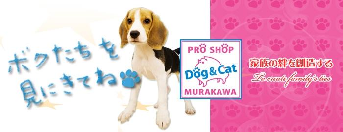 PRO SHOP MURAKAWA 井ノ口店(プロショップ ムラカワ)